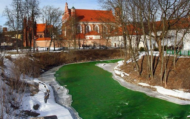The river Vilnele in Vilnius, Lithuania is dyed green to celebrate St Patrick's Day - Credit: Petras Malukas/AFP/Getty Images