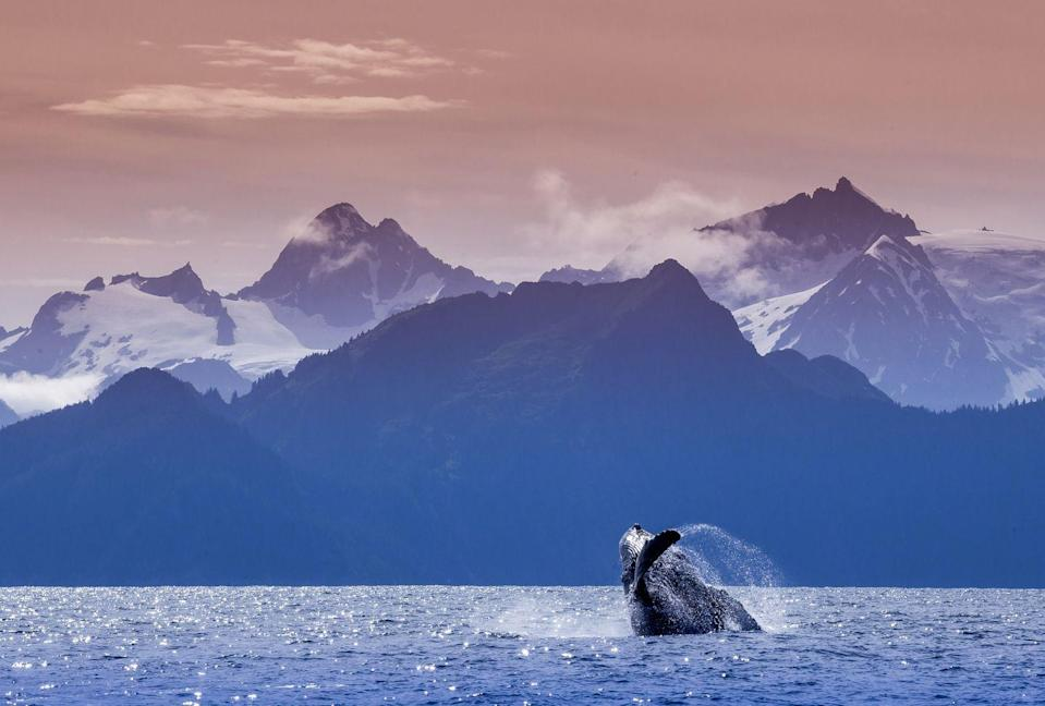 <p>Kenai Fjords National Park is one of the best places to see the mountains meet the ocean. Full of glaciers and fjords, this sprawling landscape is an excellent spot for whale watching. </p>