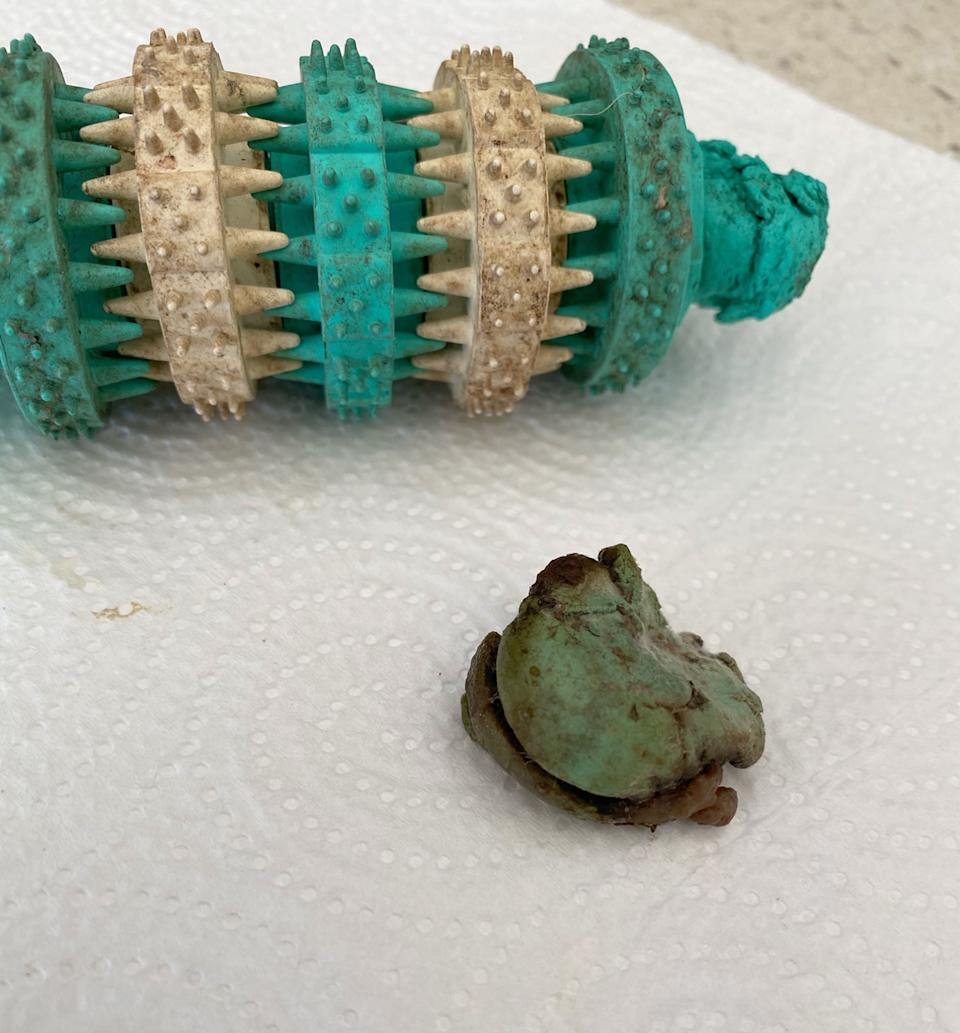PIC BY Lauren Hill/CATERS NEWS (PICTURED Toy with piece retrieved from Wombat's stomach) A dog owner is speaking out after she claims her pooch was almost KILLED by a popular £2 pet chew toy – and was left with a £1,200 vet bill.  Lauren Hill spotted the bargain teething toy at Australian department store Kmart store earlier this year and thought it would be a great gift for her adorable one-year-old pug Wombat.  The 35-year-old from the Sunshine Coast in Queensland, Australia, said her dog seemed to love it and the $5AUD [£2.70] toy soon became a favourite in Wombat's collection.  But a month later, Lauren became concerned after he started vomiting for no reason - and after a panicked trip to the vet, made a shocking discovery.  Unbelievably, the plastic Kmart teething toy had allegedly broken apart and a large piece became lodged inside Wombat's stomach, which she claims made him incredibly sick. Lauren claims her vet warned that without surgery, Wombat would die – so she forked out $2,200 [£1,200] to save her beloved pet's life and thankfully, he is now fully recovered. SEE CATERS COPY.