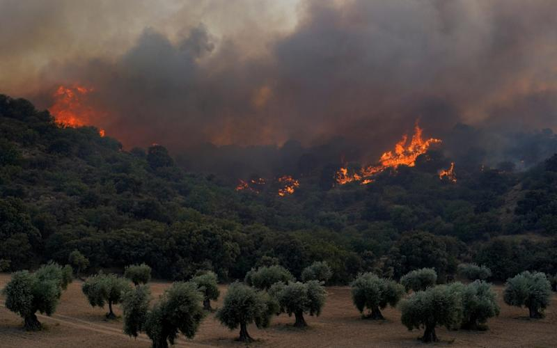 A wildfire near the city of Toledo - REUTERS