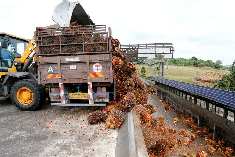 FILE PHOTO: A worker unloads palm oil fruit bunches from a lorry inside a palm oil mill in Bahau, Negeri Sembilan