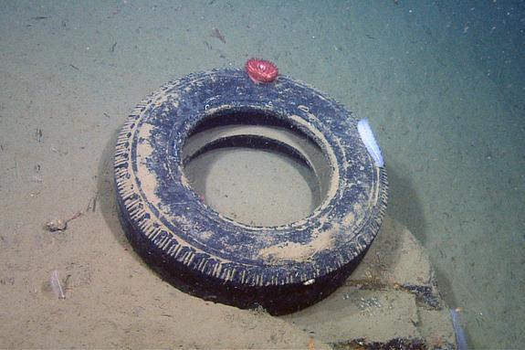 A discarded tire sits on a ledge 2,850 feet (868 m) below the ocean surface in Monterey Canyon off the central California coast.