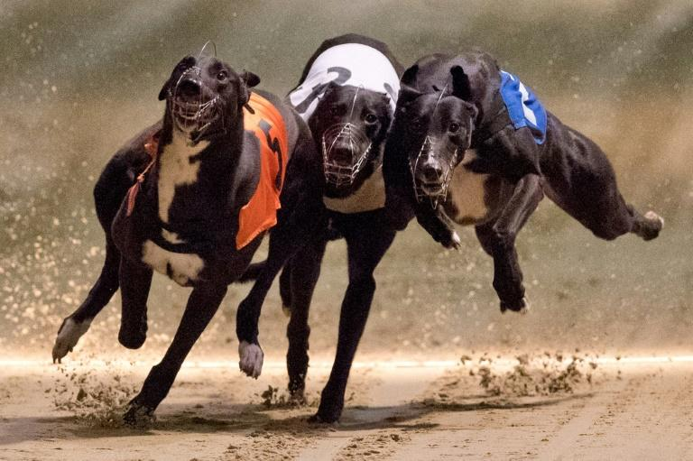 More than 20 dog tracks have been dotted around London since modern greyhound racing was introduced to Britain in the 1920s