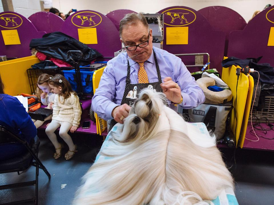 Luke Ehricht from Ohio grooms Rocky the Shih Tzu at Westminster in 2019.