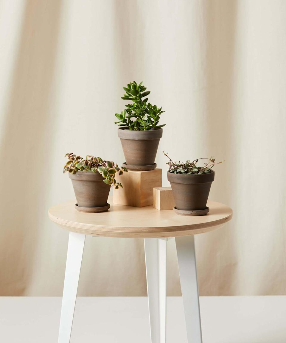 <p>Give the plant lover in your life something to smile about with this <span>Bloomscape Potted Heart and Soul Collection</span> ($65).</p>