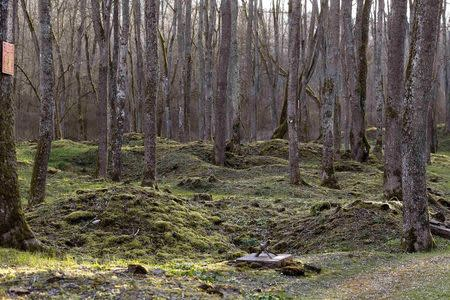 Craters from shelling during WWI are seen in the village of Bezonvaux, near Verdun, northeastern France, in this March 29, 2014 file picture. REUTERS/Charles Platiau/Files