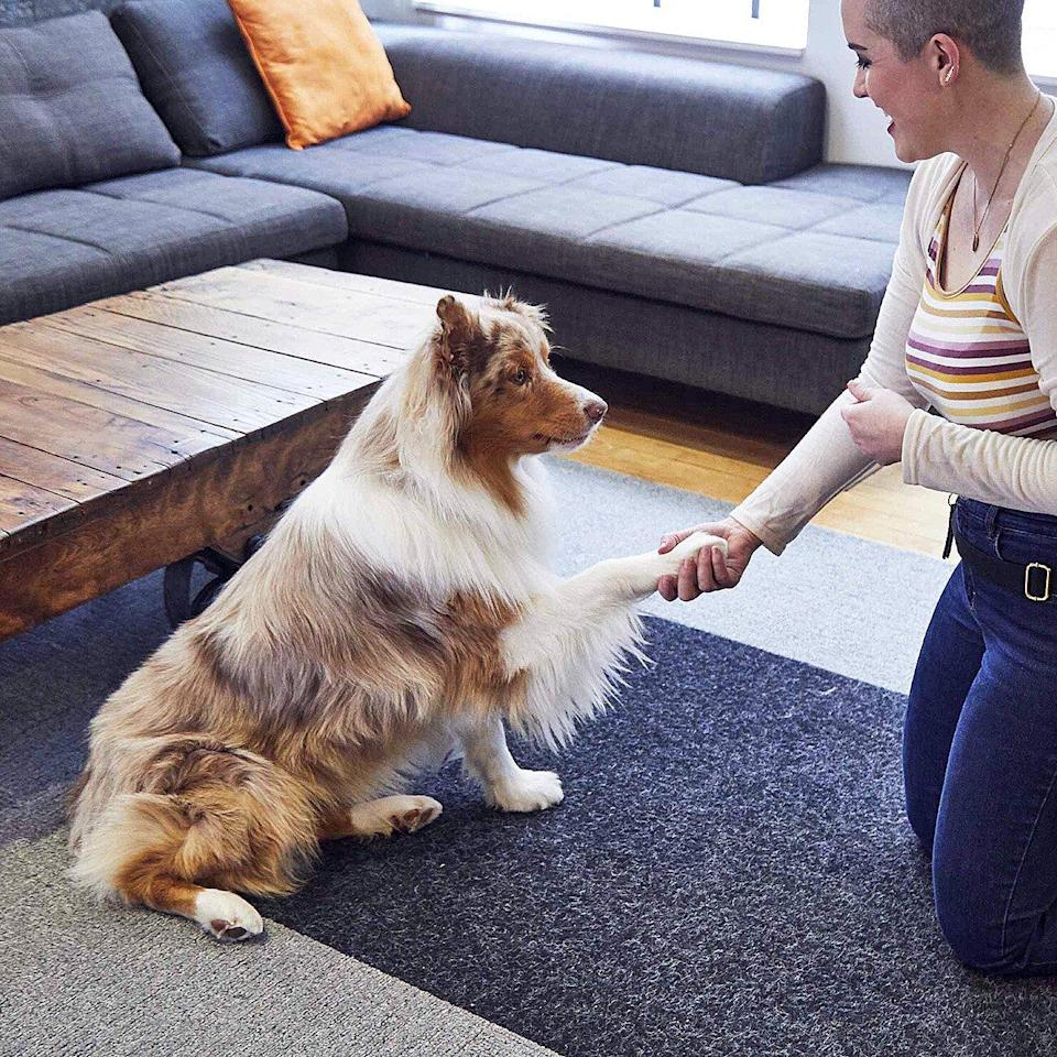 Owner smiles and shakes dog's paw