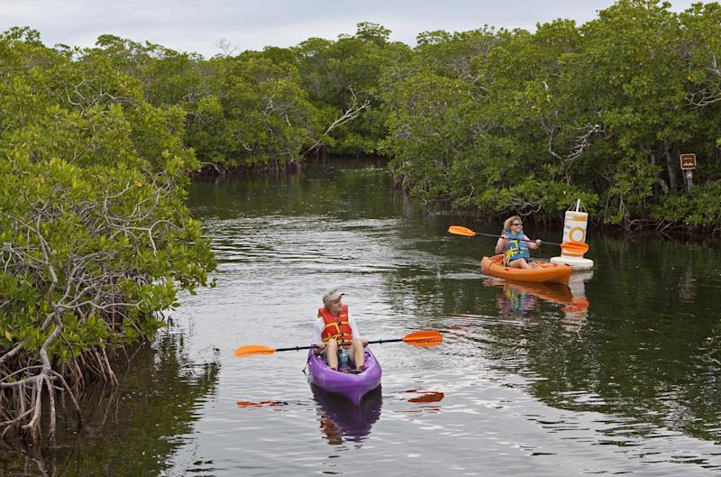 In this Nov. 27, 2010 photo released by the Florida Keys News Bureau, kayakers paddle along mangroves at John Pennekamp Coral Reef State Park in Key Largo, Fla. The nation's first underwater preserve encompasses 70 square miles of coral reefs, seagrass beds and mangrove forests. (AP Photo/Florida Keys News Bureau, Bob Care) NO SALES