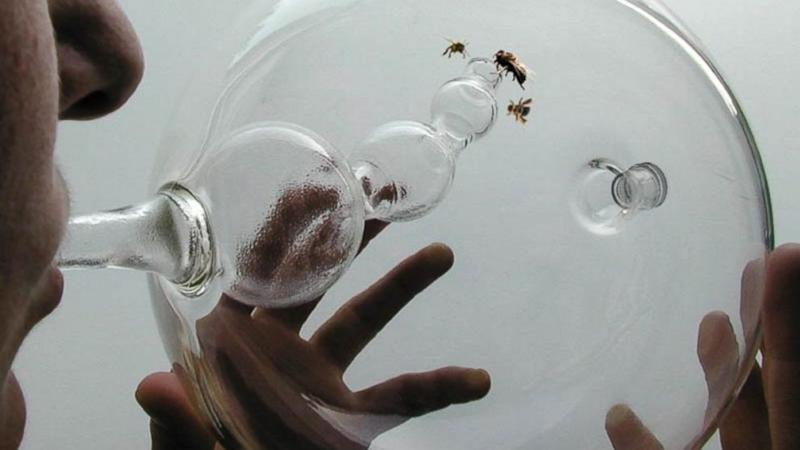 Honeybees Trained to Sniff Out Cancer
