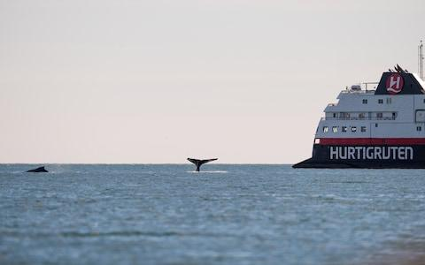 Whales seen alongside MS Spitsbergen - Credit: Andreas Kalvig Anderson