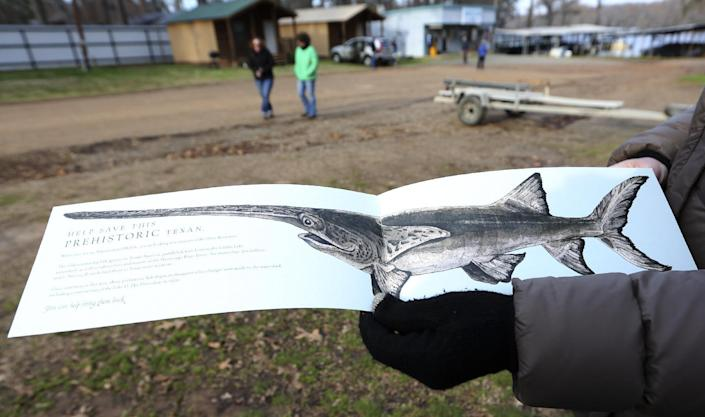 In this photo made Wednesday, Feb. 26, 2014, a drawing of a paddle fish is displayed after a tour of Caddo Lake in Uncertain, Texas. Scientists and researchers from a half-dozen state, federal and private agencies are planning to release up to 50 paddlefish into this Texas lake they once called home. (AP Photo/LM Otero)