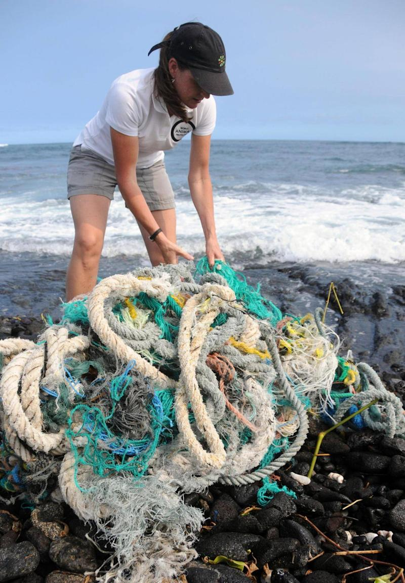 Rope washed up in a hurricane in Hawaii (World Animal Protection / Rachel Ceretto)