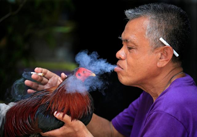 <p>A man blows cigarette smoke on his fighting cock at the backyard of his house in Paranaque city, metro Manila, Philippines May 13, 2017. (Photo: Romeo Ranoco/Reuters) </p>
