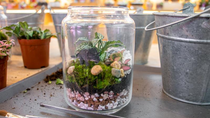 Picture of a completed close terrarium
