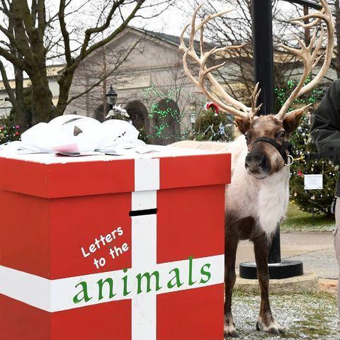 <p>At the Brookfield Zoo outside Chicago, children can send letters to the animals (and Josie and Bunny the reindeer are there to supervise drop off!).</p>