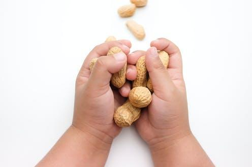 """<span class=""""attribution""""><a class=""""link rapid-noclick-resp"""" href=""""https://www.shutterstock.com/image-photo/childs-hand-holding-peanuts-isolated-on-596715836"""" rel=""""nofollow noopener"""" target=""""_blank"""" data-ylk=""""slk:2YouStockPhoto/Shutterstock"""">2YouStockPhoto/Shutterstock</a></span>"""