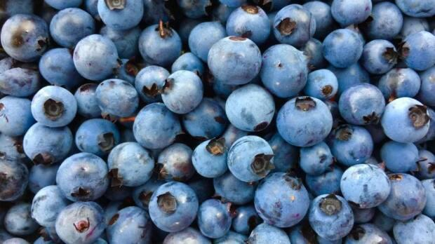The federal government is considering an increase on pesticide residue in blueberries that Canadian producers say they didn't ask for and don't want. (Chantale Desbiens/Radio-Canada - image credit)