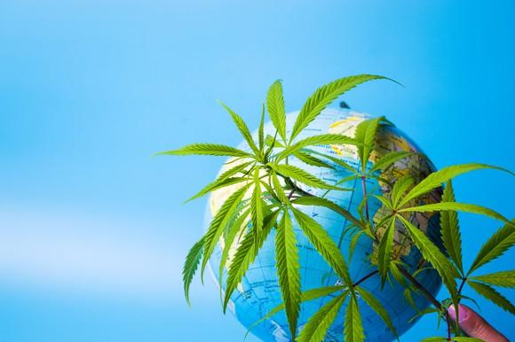 A hand holding cannabis leaves in front of a world globe.