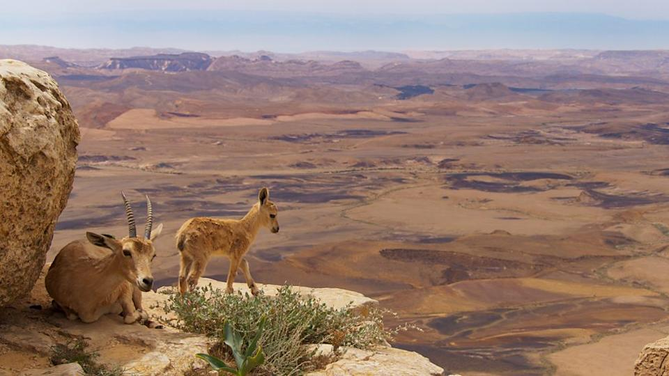 Documentary fans like to kick back and watch a show such as Planet Earth (Image: BBC)