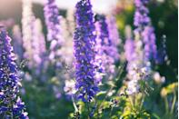 """<p>Refresh your space with a fresh bunch of blue delphiniums — another flower to have on your radar for 2021. Grown for their showy spikes of gorgeous summer flowers, these perennials will add a burst of much-needed colour. </p><p>A must-have for any <a href=""""https://www.countryliving.com/uk/homes-interiors/gardens/a33963652/garden-trends-2021/"""" rel=""""nofollow noopener"""" target=""""_blank"""" data-ylk=""""slk:garden"""" class=""""link rapid-noclick-resp"""">garden</a> lover, these will grow back every spring. </p><p><a class=""""link rapid-noclick-resp"""" href=""""https://go.redirectingat.com?id=127X1599956&url=https%3A%2F%2Fwww.gardeningexpress.co.uk%2Fdelphinium-magical-collection-pack-of-five&sref=https%3A%2F%2Fwww.countryliving.com%2Fuk%2Fhomes-interiors%2Fgardens%2Fg35147195%2Fflower-trends-2021%2F"""" rel=""""nofollow noopener"""" target=""""_blank"""" data-ylk=""""slk:BUY NOW VIA GARDENING EXPRESS"""">BUY NOW VIA GARDENING EXPRESS </a></p>"""