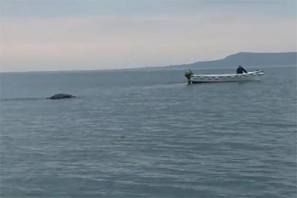 Video: Has a group of students filmed the 'Irish Loch Ness Monster'?