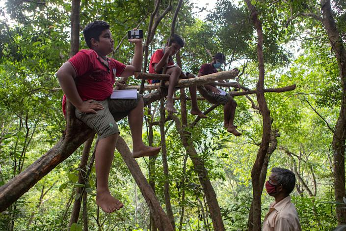 Sri Lankan children sit on tree branches as they access their online lessons from a forest reserve (AP)