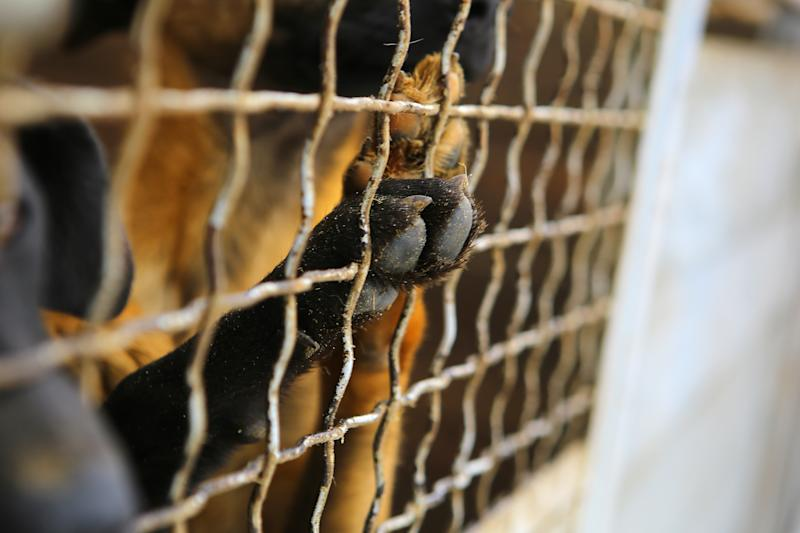 Abandoned dogs are pictured in a kennel.