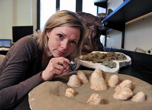 Dinos Sat on Nests Like Birds, Shells Reveal