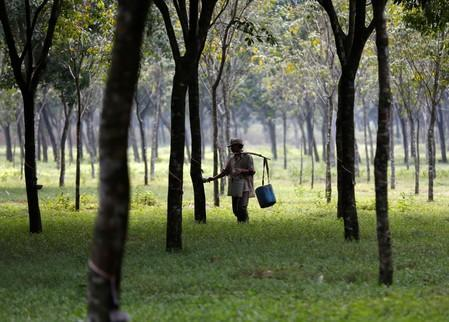 A worker collects latex at a rubber plantation near Bogor, southwest of Jakarta in West Java province
