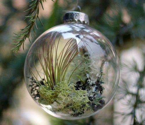 """<p>Bring your ornaments to life—literally—by creating mini terrariums out of glass bulbs.</p><p>Get the tutorial at <em><a href=""""https://www.housebeautiful.com/lifestyle/a25351129/diy-plant-christmas-ornaments/"""" rel=""""nofollow noopener"""" target=""""_blank"""" data-ylk=""""slk:House Beautiful"""" class=""""link rapid-noclick-resp"""">House Beautiful</a>.</em></p>"""