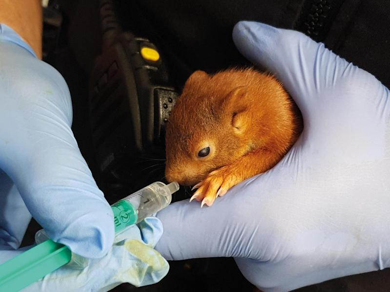 Karl-Friedrich the squirrel was rescued by police in the German city of Karlsruhe: Karlsruhe Police