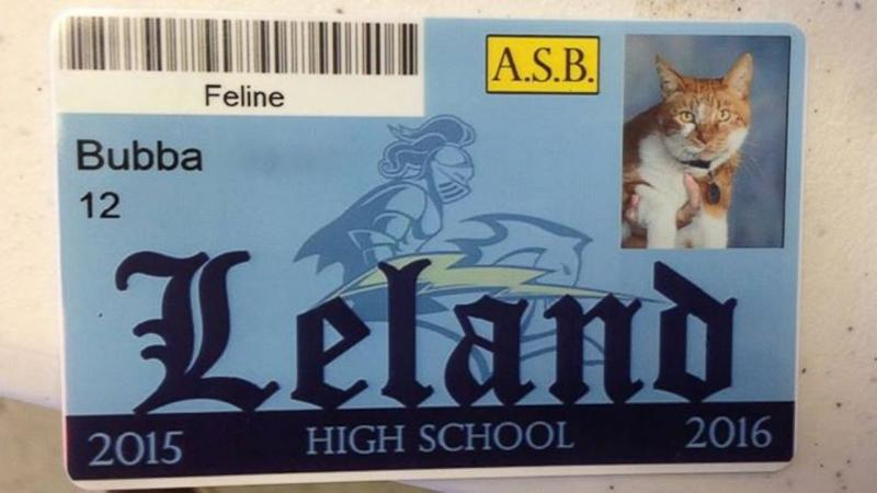 California High School Gives 'Student ID' to Well-Known Cat