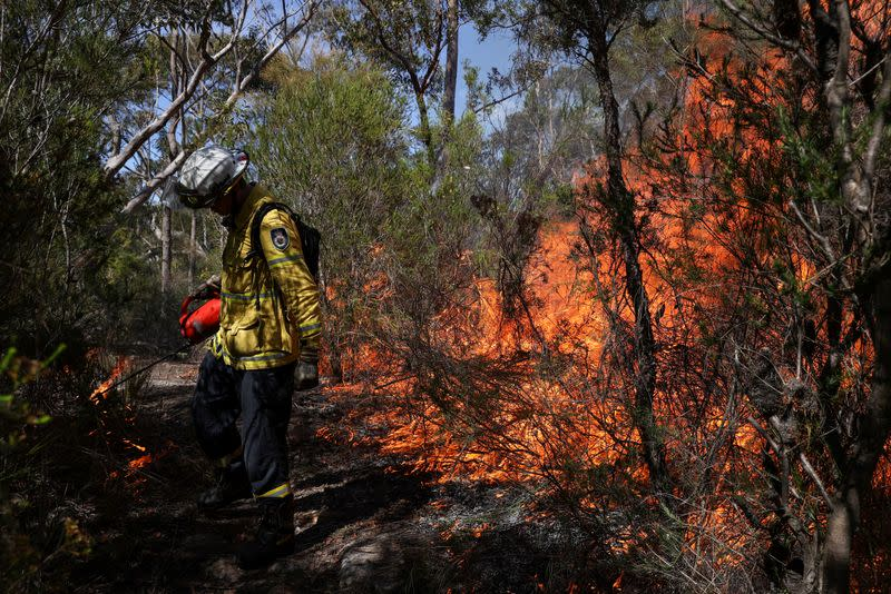 FILE PHOTO: NSW RFS personnel conduct a controlled burn to eliminate fuels in Sydney