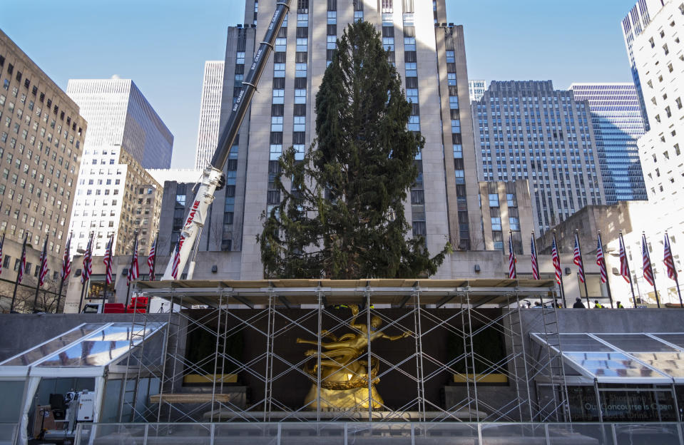 FILE - In this Saturday, Nov. 14, 2020, file photo, the 2020 Rockefeller Center Christmas tree, a 75-foot tall Norway spruce that was acquired in Oneonta, N.Y., is secured on a platform at Rockefeller Center, in New York. The tree lighting ceremony, scheduled for Wednesday, Dec. 2, be a mask-mandated, time-limited, socially distanced locale due to the coronavirus pandemic. (AP Photo/Craig Ruttle, File)