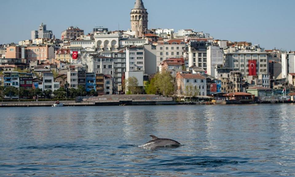 A dolphin swims in the Bosphorus