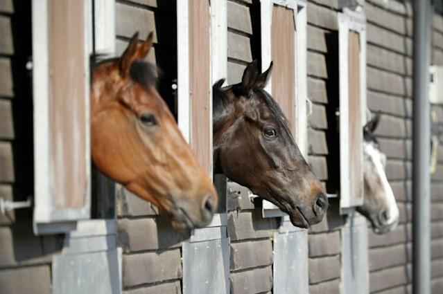 Horses at George Baker's stables in southeast England (AFP Photo/ADRIAN DENNIS)