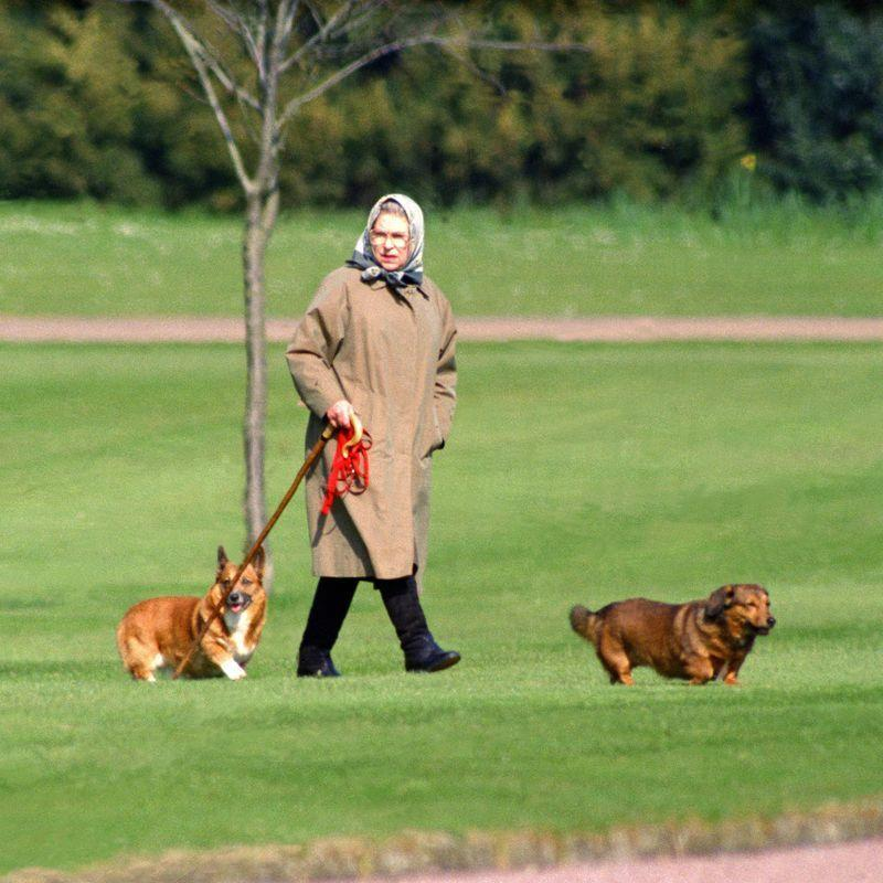 <p>According to the same <em>Telegraph</em> article, her corgi Willow died in 2018, marking the end of Susan's lineage. Willow was almost 15 when she died, and a 14th generation corgi from the Queen's breeding program that lasted 70 years.</p>