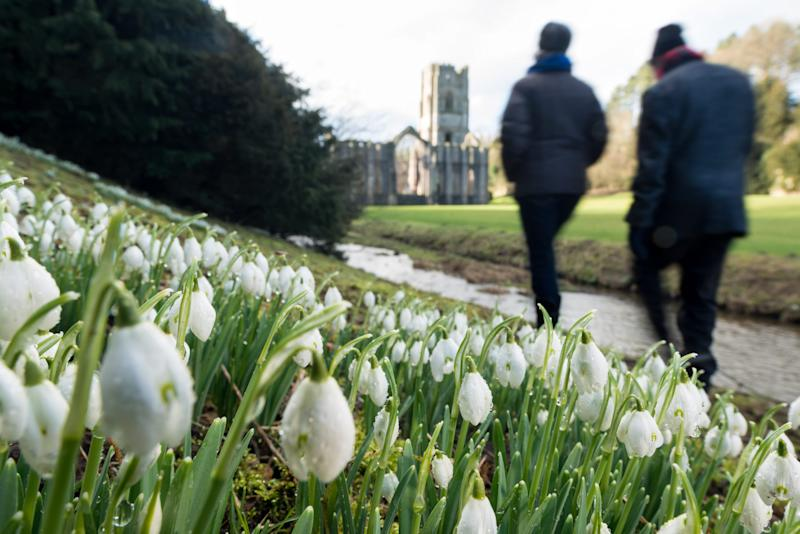 Snowdrops at Fountains Abbey, Yorkshire - © 2014 - Jonathan Pow - All rights reserved
