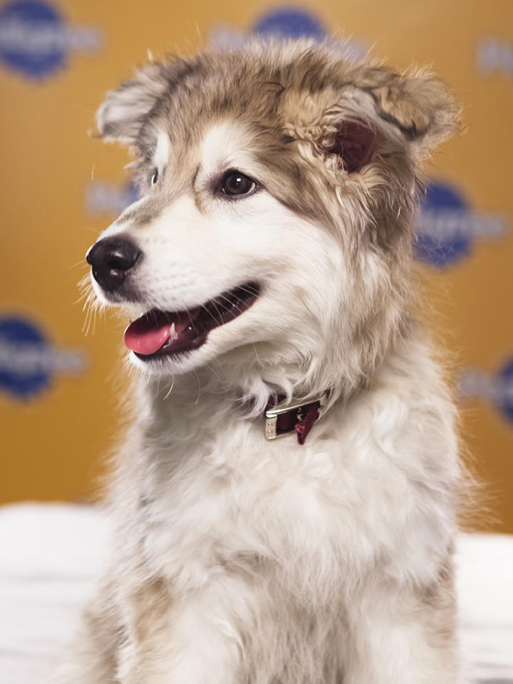 Name: Aurora