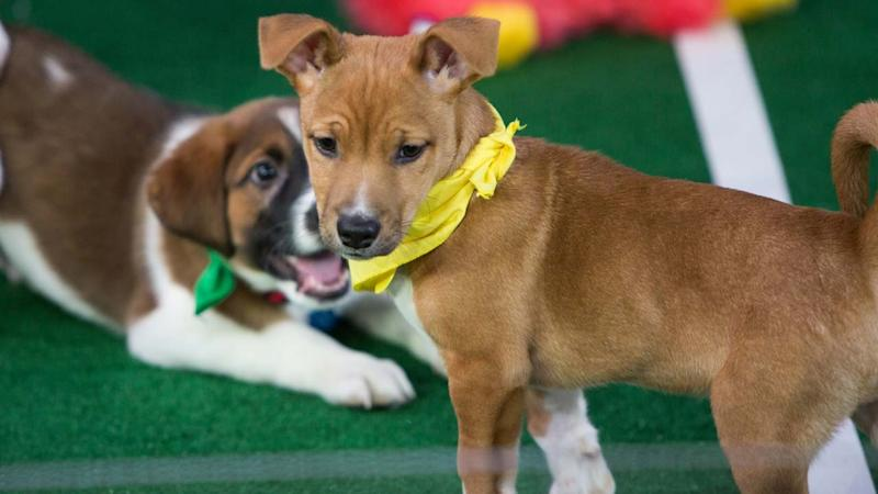Puppy Bowl 2018's Biggest Winners and Cutest Moments