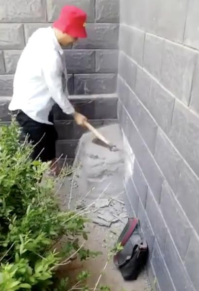 Mother dog may have been forced to eat own puppy after being sealed in wall for 17 days in Chinese housing estate