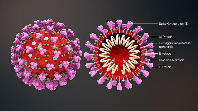 What is CoronaVirus (CoV) and How To Protect Yourself