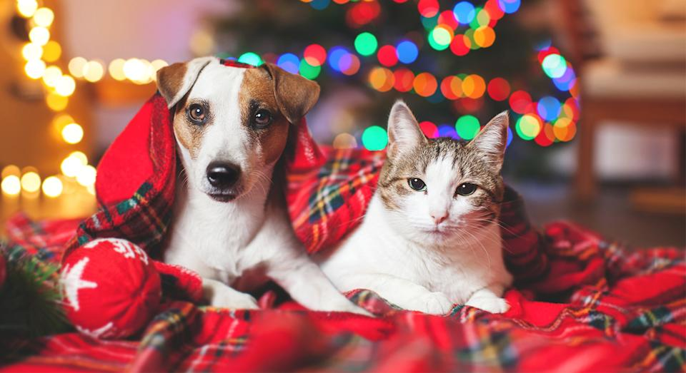 These are the best gifts to buy for your dog, cat or small pet this Christmas. [Photo: Getty]