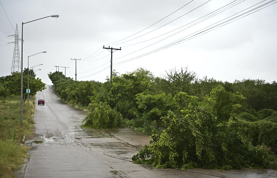 Fallen trees lay on the side of a road after the passing of Hurricane Pamela in Mazatlan, Mexico, Wednesday, Oct. 13, 2021. Pamela made landfall on Mexico's Pacific coast just north of Mazatlan on Wednesday, bringing high winds and rain to the port city. (AP Photo/Roberto Echeagaray)