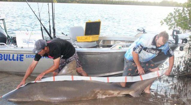 Anglers are catching plenty of bull sharks. Source: Mad Fins Fishing