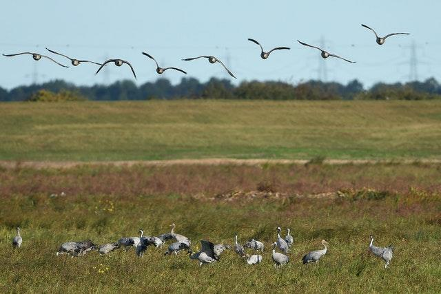 Cranes at wetlands