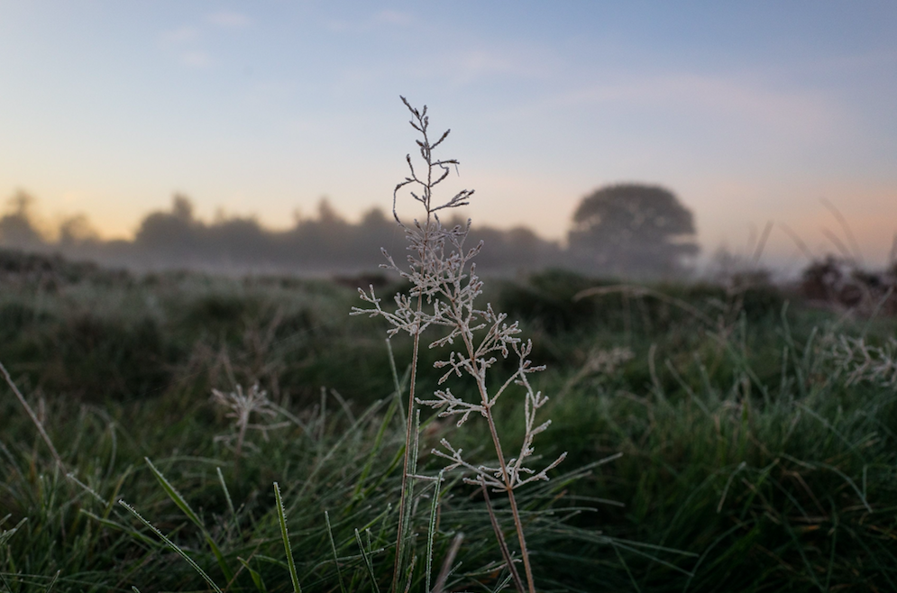 <p>Frosted grass at sunrise in Bushy Park met early risers. (Rex) </p>