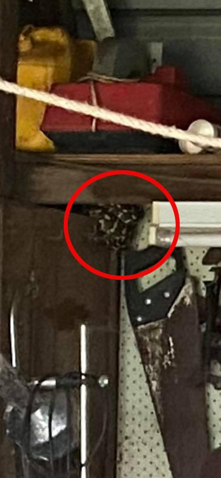 It was later pointed out that the snake was sitting just above the saw on the left-hand side of the photo. Photo: Facebook
