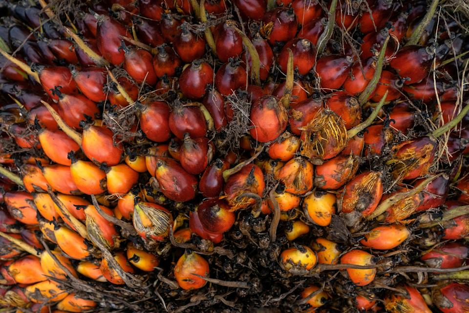 The fruit of the oil palm tree produces an oil that is incredibly versatile and cheap. (Photo: Zikri Maulana/SOPA Images/LightRocket via Getty Images)