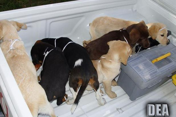 Vet 'stitched liquid heroin' into live puppies to smuggle it across border